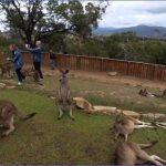 wild tasmania travel australia  14 150x150 Wild Tasmania   Travel Australia