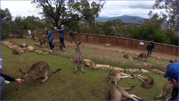 wild tasmania travel australia  14 Wild Tasmania   Travel Australia