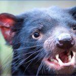 wild tasmania travel australia  18 150x150 Wild Tasmania   Travel Australia