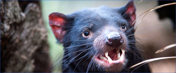 wild tasmania travel australia  18 Wild Tasmania   Travel Australia