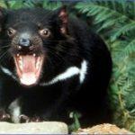 wild tasmania travel australia  19 150x150 Wild Tasmania   Travel Australia