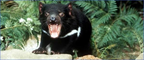 wild tasmania travel australia  19 Wild Tasmania   Travel Australia