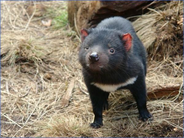 wild tasmania travel australia  4 Wild Tasmania   Travel Australia