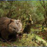 wild tasmania travel australia  5 150x150 Wild Tasmania   Travel Australia