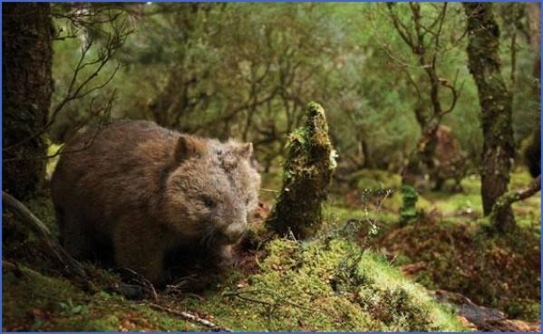 wild tasmania travel australia  5 Wild Tasmania   Travel Australia