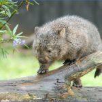 wild tasmania travel australia  6 150x150 Wild Tasmania   Travel Australia