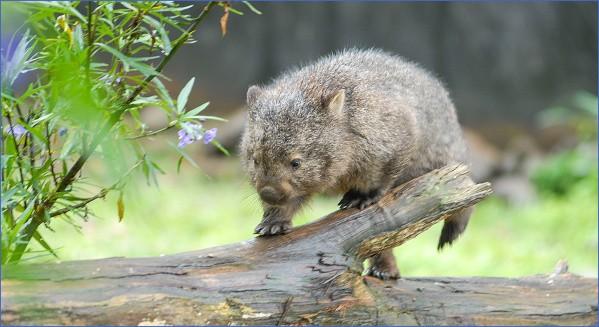 wild tasmania travel australia  6 Wild Tasmania   Travel Australia