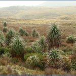wild tasmania travel australia  9 150x150 Wild Tasmania   Travel Australia