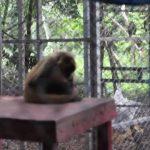 wildlife volunteering in costa rica 37 150x150 WILDLIFE VOLUNTEERING IN COSTA RICA