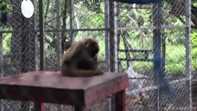 wildlife volunteering in costa rica 37 WILDLIFE VOLUNTEERING IN COSTA RICA