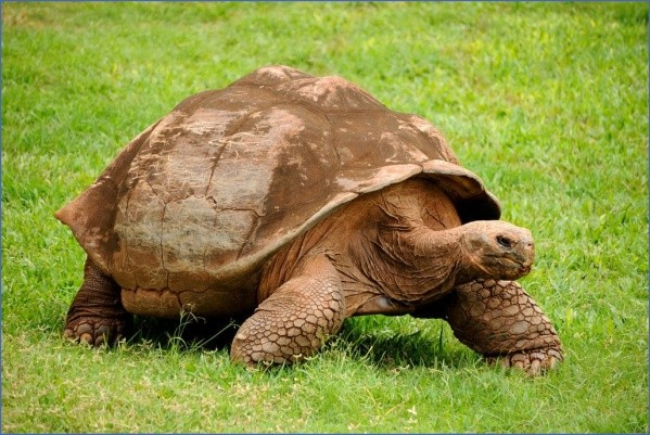 worlds most unique animals galapagos island post 11 Worlds Most Unique Animals Galapagos Island post