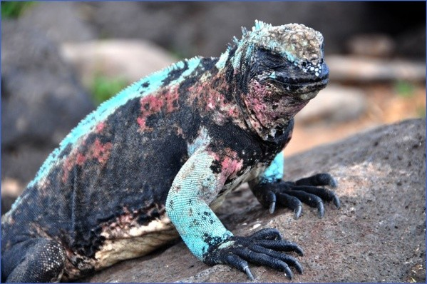 worlds most unique animals galapagos island post 15 Worlds Most Unique Animals Galapagos Island post