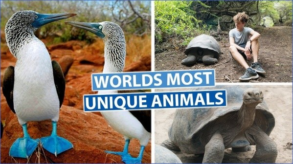 worlds most unique animals galapagos island post 17 Worlds Most Unique Animals Galapagos Island post