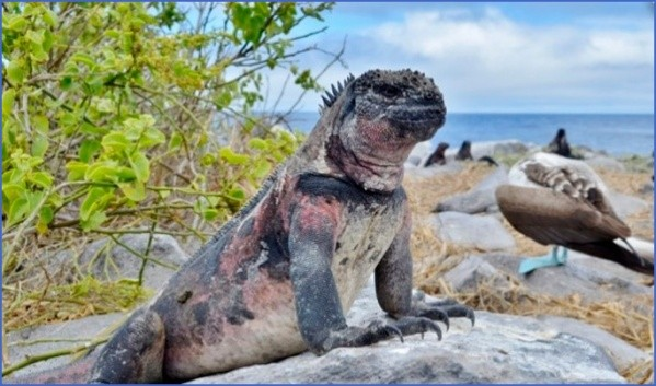 worlds most unique animals galapagos island post 2 Worlds Most Unique Animals Galapagos Island post