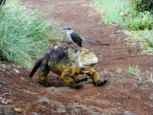 worlds most unique animals galapagos island post 3 Worlds Most Unique Animals Galapagos Island post