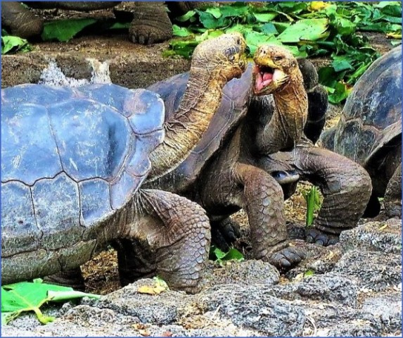 worlds most unique animals galapagos island post 8 Worlds Most Unique Animals Galapagos Island post