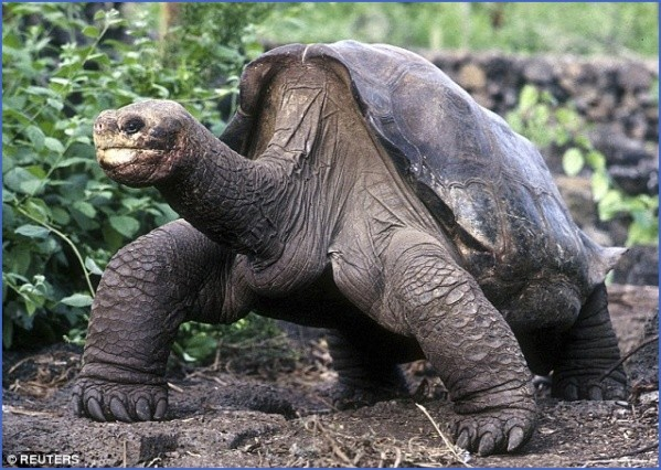 worlds most unique animals galapagos island post 9 Worlds Most Unique Animals Galapagos Island post