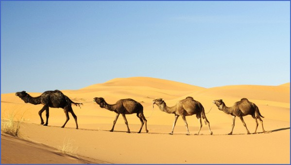 travel advice and advisories for tunisia 17 Travel Advice And Advisories For Tunisia