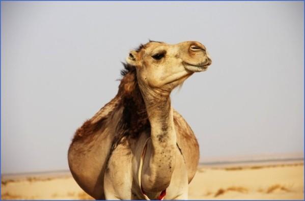 travel advice and advisories for tunisia 18 Travel Advice And Advisories For Tunisia