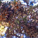 usa butterflying destinations 10 150x150 USA Butterflying Destinations