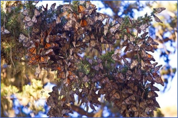 usa butterflying destinations 10 USA Butterflying Destinations