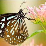 usa butterflying destinations 11 150x150 USA Butterflying Destinations