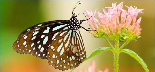 usa butterflying destinations 11 USA Butterflying Destinations