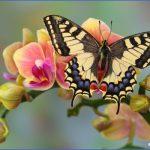 usa butterflying destinations 13 150x150 USA Butterflying Destinations