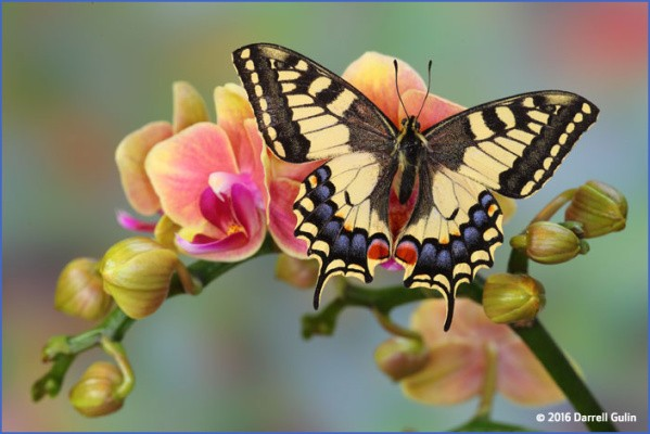 usa butterflying destinations 13 USA Butterflying Destinations