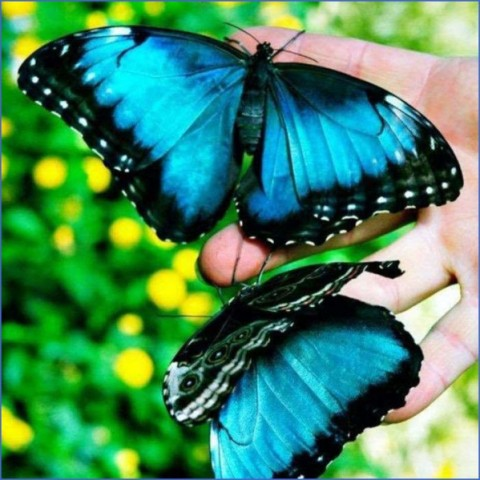 usa butterflying destinations 2 USA Butterflying Destinations