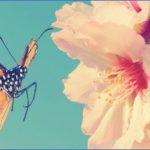 usa butterflying destinations 3 150x150 USA Butterflying Destinations