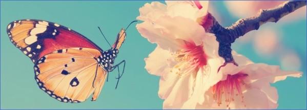usa butterflying destinations 3 USA Butterflying Destinations