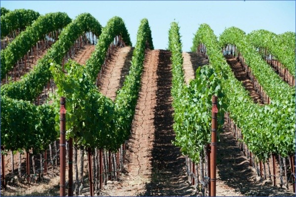 winery tours in usa 8 Winery Tours in USA