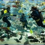 atlantis shark safari experience in dubai 13 150x150 Atlantis Shark Safari Experience in Dubai
