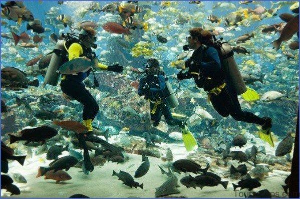 atlantis shark safari experience in dubai 13 Atlantis Shark Safari Experience in Dubai