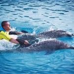 atlantis shark safari experience in dubai 15 150x150 Atlantis Shark Safari Experience in Dubai