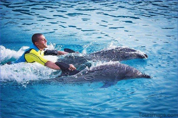 atlantis shark safari experience in dubai 15 Atlantis Shark Safari Experience in Dubai