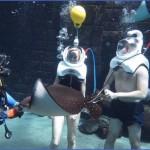 atlantis shark safari experience in dubai 2 150x150 Atlantis Shark Safari Experience in Dubai