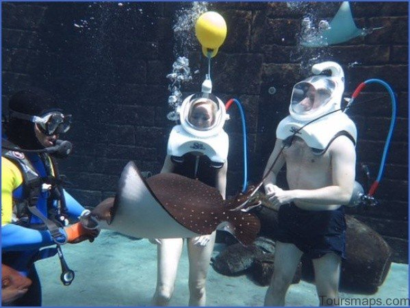 atlantis shark safari experience in dubai 2 Atlantis Shark Safari Experience in Dubai