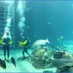 atlantis shark safari experience in dubai 3 150x150 Atlantis Shark Safari Experience in Dubai