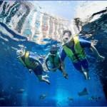 atlantis shark safari experience in dubai 8 150x150 Atlantis Shark Safari Experience in Dubai