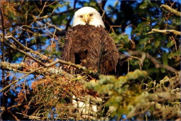 birds bears wildlife flora and fauna of the trail 4 BIRDS, BEARS & WILDLIFE FLORA AND FAUNA OF THE TRAIL