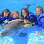 dolphin encounters in usa 14 150x150 Dolphin Encounters in USA