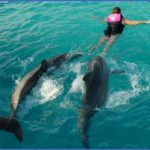 dolphin encounters in usa 9 150x150 Dolphin Encounters in USA