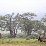 safaris in the u s a 10 150x150 Safaris in the U.S.A