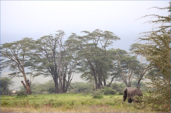 safaris in the u s a 10 Safaris in the U.S.A