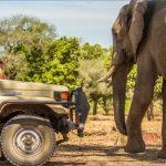 safaris in the u s a 14 150x150 Safaris in the U.S.A