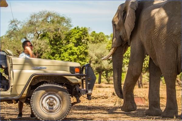 safaris in the u s a 14 Safaris in the U.S.A