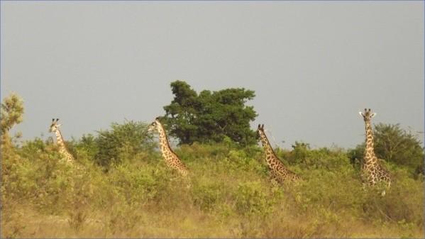 safaris in the u s a 15 Safaris in the U.S.A