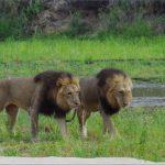 safaris in the u s a 3 150x150 Safaris in the U.S.A